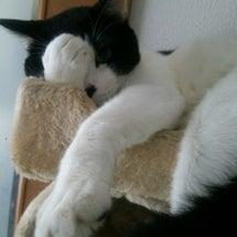 部屋と掃除機と猫