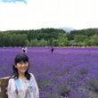 ラベンダーの北海道!