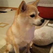 夏バテとポケモンGO