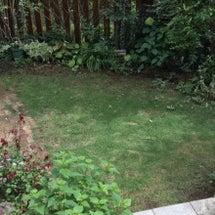 久しぶりの庭仕事