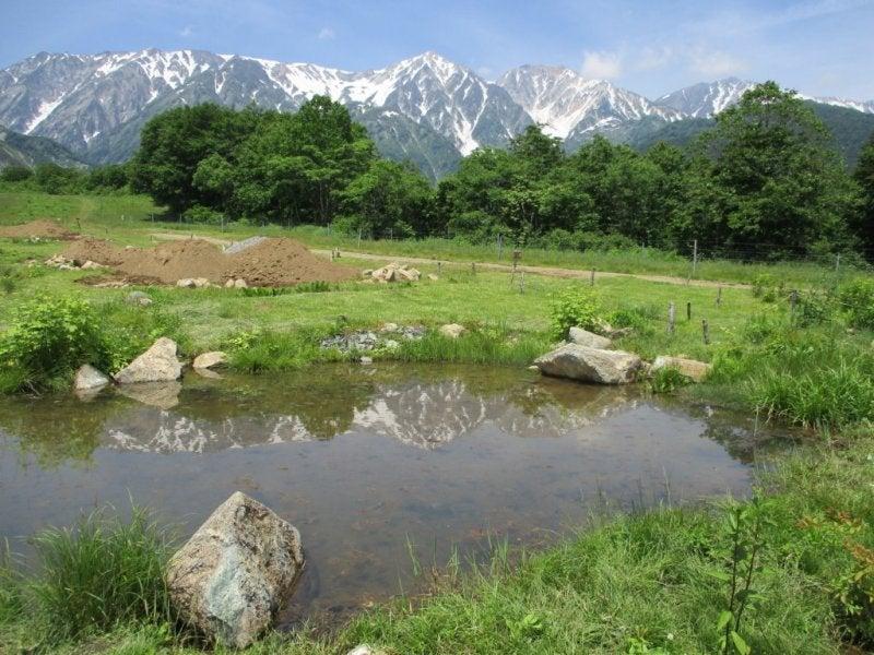 湿原観察から、姫川源流を散策4