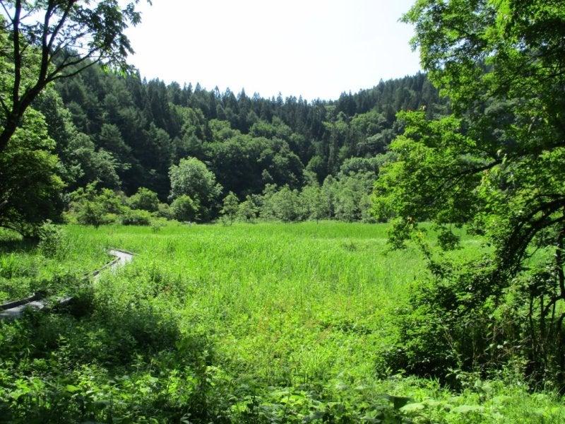 湿原観察から、姫川源流を散策2