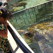 下田海中水族館でイル…