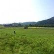 ホーリーバジル畑