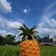 西表島 パイナップル
