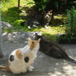 川崎市・地域猫セミナ…