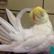 熱心な羽繕い