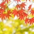 秋の瞑想会☆9/23…
