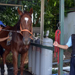馬の伝統行事相馬野馬…