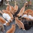 にゃんこの楽園・猫島…