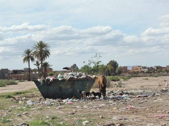 ゴミを荒らす動物たち