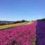 雄大な大地と美しい花…