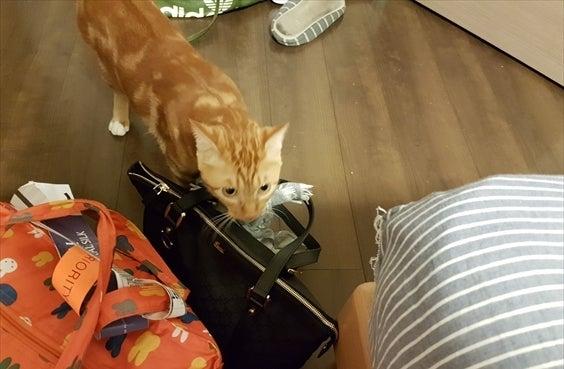 帰宅時の荷物チェック その1