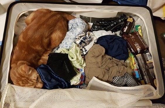 スーツケースにすっぽり入ります。