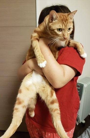 母ちゃんに抱きかかえられます