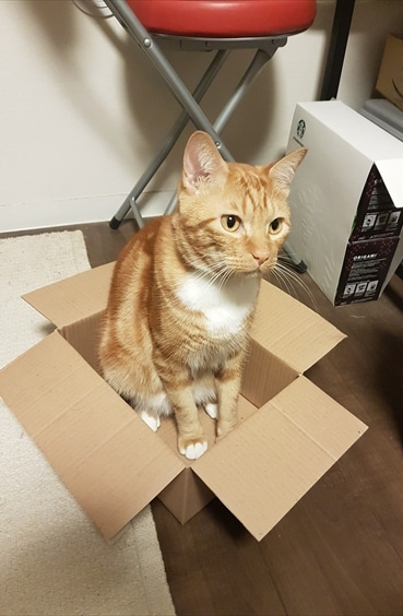 小さい箱も自分の部屋にします その1