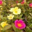 草花も元気よく開花し…