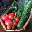 畑で採れた野菜♫