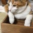 箱はスルーできないの…