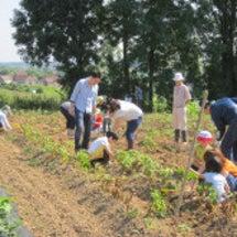 ジャガイモ収穫体験で…
