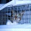 地元猫、不妊手術の捕…