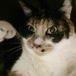 猫バカ美容師  7