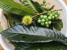 枇杷の葉、栗の若い実、葡萄