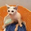 センター収容猫〜最終…