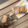 ■犬の食べ物と犬の写…
