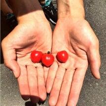 ♡プチトマト