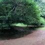 武蔵野公園 散策 パ…