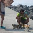 青島は暑い! でも猫…