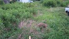 春日井市で草刈り