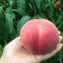 桃のティーパーティー…
