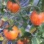 泉州の農園訪問