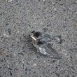 燕の赤ちゃん/受難の…