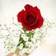 お花に癒される♡
