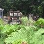 北海道大学 植物園に…