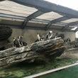 海の見える水族館で芸…