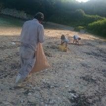 家族総出の海草集め