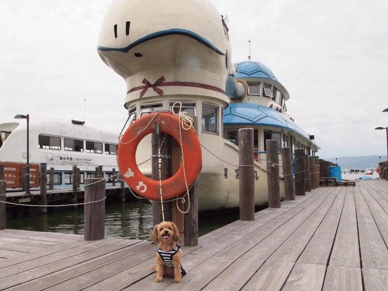 諏訪湖遊覧船 カメ