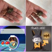 Go pokemon…