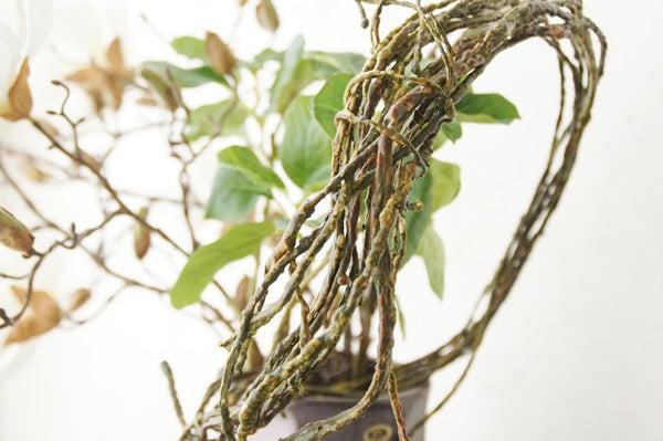 木蓮の造花