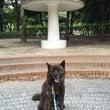 秋葉公園 朝散歩♫