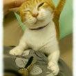 里親募集中の猫ちゃん…