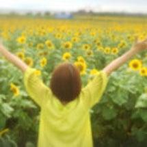 夏と向日葵と私。 …