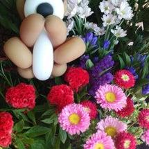 お花が 入荷してお…