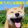 リオ五輪、日本はメダ…