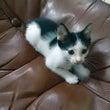 子猫を保護しました!…