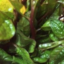 夏の葉野菜